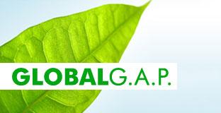 globalgap2.jpg